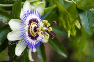 Eine Blume besonders gut getroffen - der fotografische Blick
