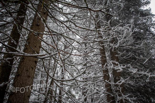 Fotografieren im Winter - Tipps von FOTOmauz